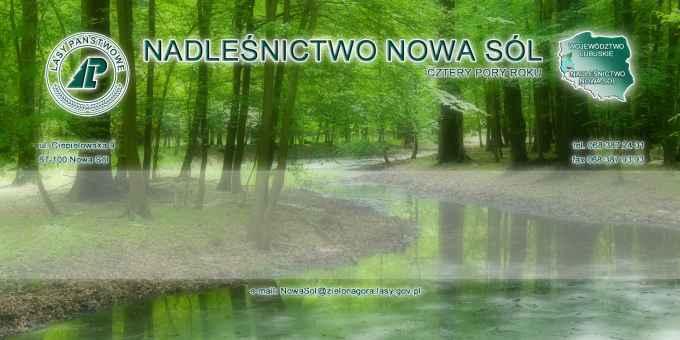 Prezentacja panoramiczna dla obiektu Nadleśnictwo Nowa Sól
